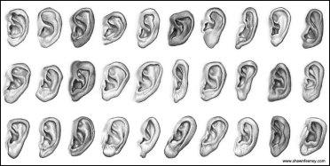 16_ears